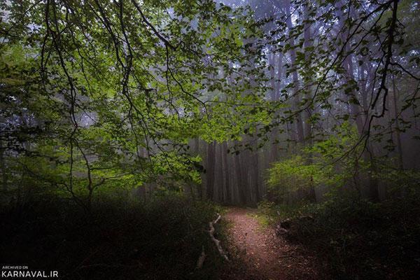 سفر به جنگل الیمستان؛ تابستانی رویایی در آمل