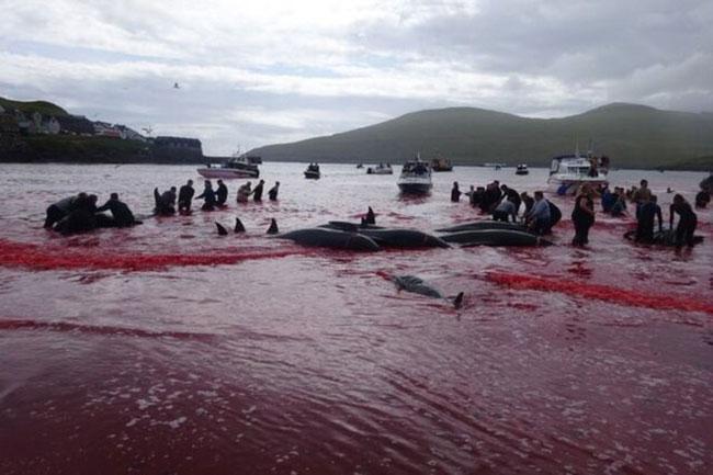 قتل عام های سنتی حیوانات در دنیا