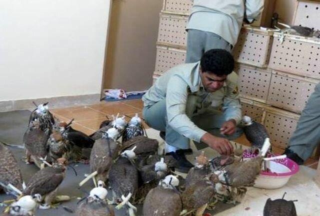 کشف پرندگان قاچاق از اتوبوس مسافربری در سیستان و بلوچستان